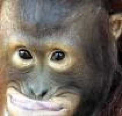 Маймуните си падат по хеви метъл