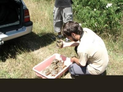 20 сухоземни костенурки отново на свобода 1