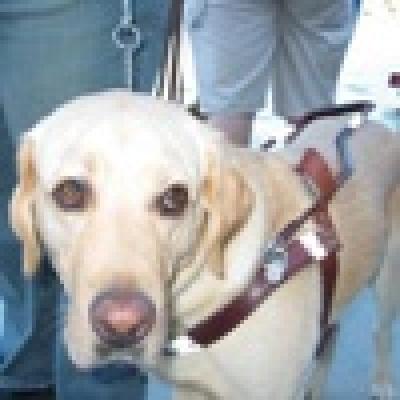 Отказват достъп на куче-гей в ресторант