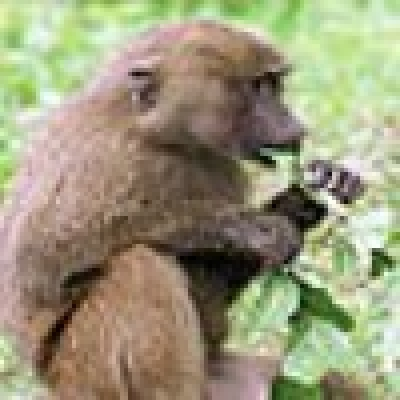 Слагат климатици при маймунките