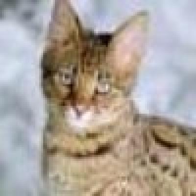 Новият случай на бяс в Разград е при домашна котка