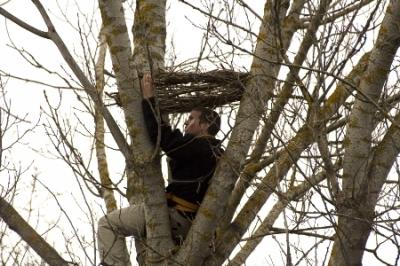 Поставяне на изкуствено гнездо