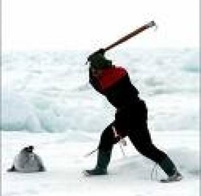 Така се убиват тюлените