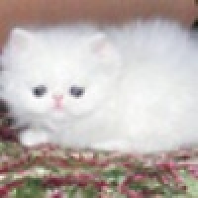 От 300 лв. до над 2 хил. евро струва една котка в зависимост от породата й, според експерт