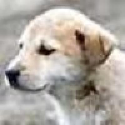 50 бездомни кучета са обезпаразитени