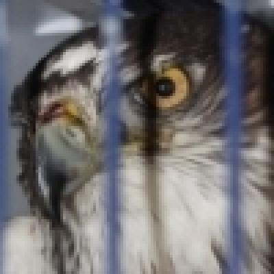 Незаконен износ на изключително редки птици