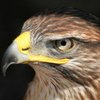 Избрани НОВИНИ от пресата за Вас... - Откриха птичи грип във Варна