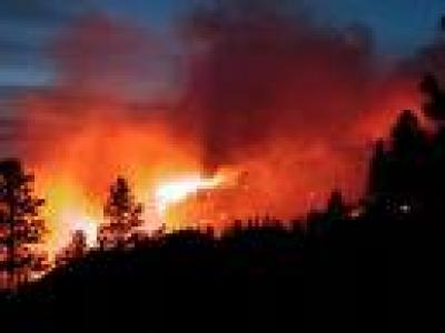 4 хектара борова гора са изгорели при пожара