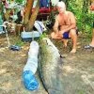 Рибар улови 90-килограмов сом