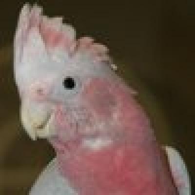 Какаду Розово