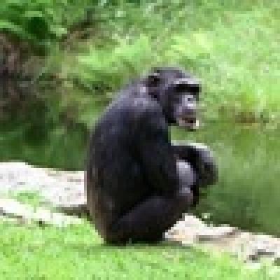 - Шимпанзетата осъзнават смъртта