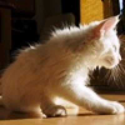 - Бдителна котка спаси жилищен блок от пожар