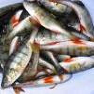 Избрани НОВИНИ от пресата за Вас... - От 15 Април - сух режим за рибарите