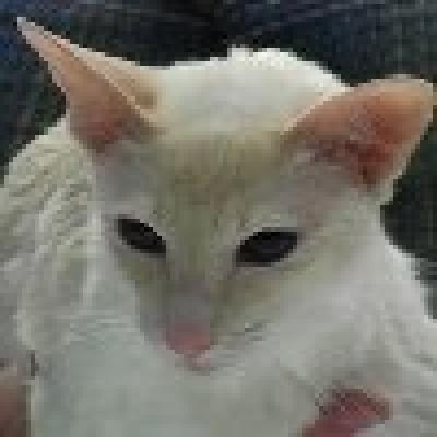 Яванска котка