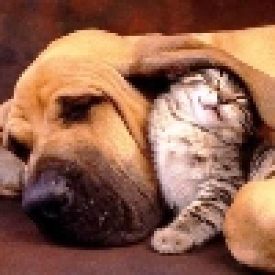 Котките и кучетата пазят от рак
