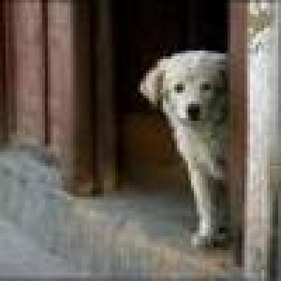 Избрани НОВИНИ от пресата за Вас... - Анастас Анастасов: Хуманното умъртвяване на бездомните кучета е единственото решение за сп