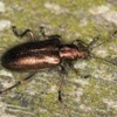 Интересно за насекомите