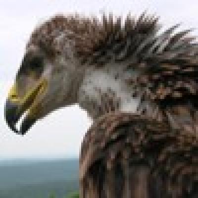 - Откраднаха 40-дневно царско орле от гнездото му в Сакар