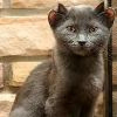 Котки: Роди се коте с 4 уши