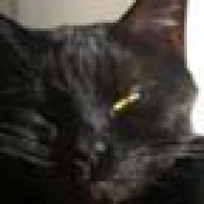 Черните котки