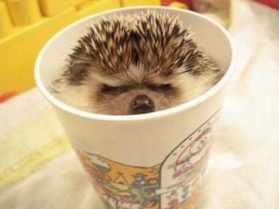 Сладури - Аз кафенцето го пийнах вече..