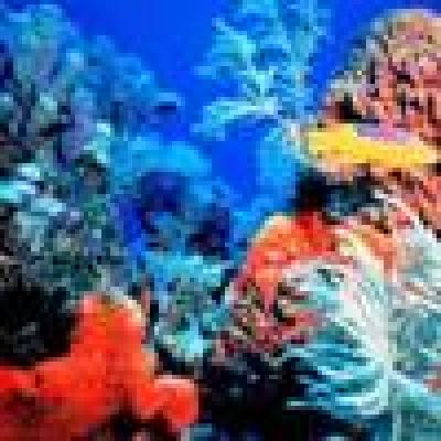 Избрани НОВИНИ от пресата за Вас... - Кораловите рифове имат нужда да разговарят