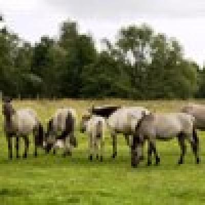 Диви коне пощуриха село