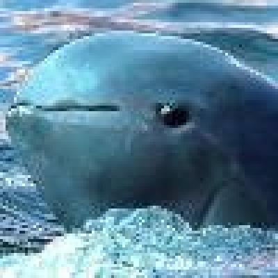 Делфини - откриха рядък вид делфни