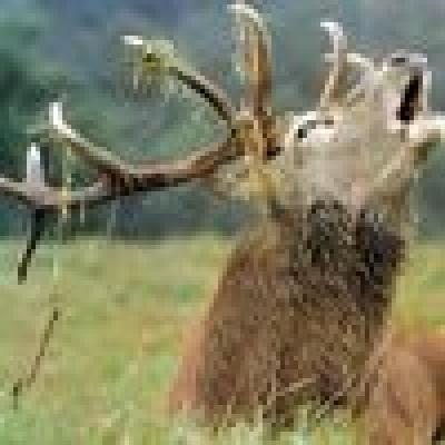 Избрани НОВИНИ от пресата за Вас... - Откриха убит елен