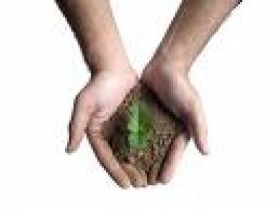 Актуални новини - Залесяват над 2000 декара горски площи