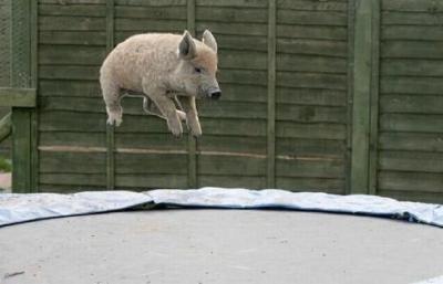 Сладури - И аз мога да летя!