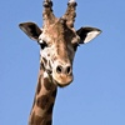 Богаташи избиват жирафи за 15000 евро