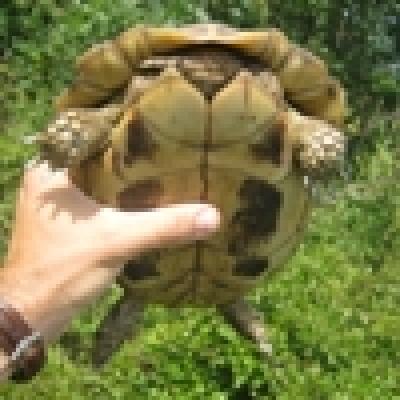 - Предотвратиха опит за контрабанда на 1140 редки костенурки