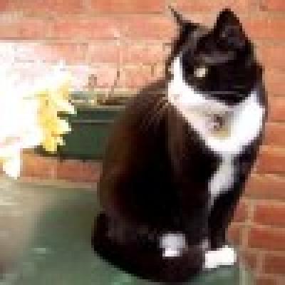 Изгубена котка се намери след 5 години