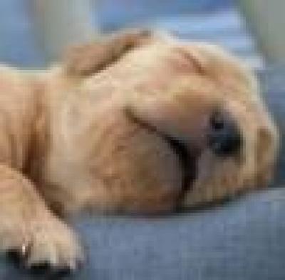 Около 1 000 бездомни кучета се умъртвяват годишно