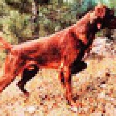 Новини - Сто кучета в София имат платена такса,