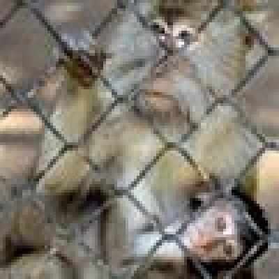 Избрани НОВИНИ от пресата за Вас... - Конфискуваха стресирана 6-месечна маймуна