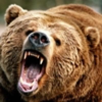 Избрани НОВИНИ от пресата за Вас... - Убиха мечок гигант край Севлиево