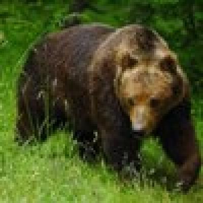 Избрани НОВИНИ от пресата за Вас... - Щатски ловец мами мечка със сладкиши