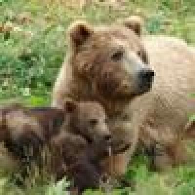 - Нелегален превоз на мечки в смолянско...