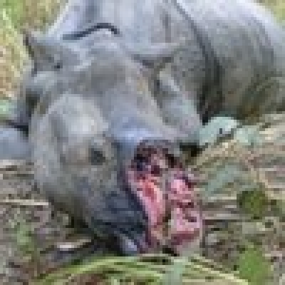 Убиха любимия носорог на принц Уилям