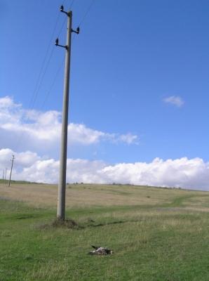 Открит е мъртъв скален орел - снимка - Зелени балкани