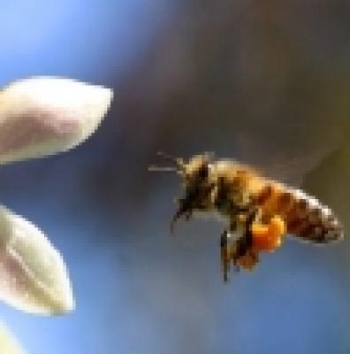 Новини - Пчелните семейства в Търговищка област