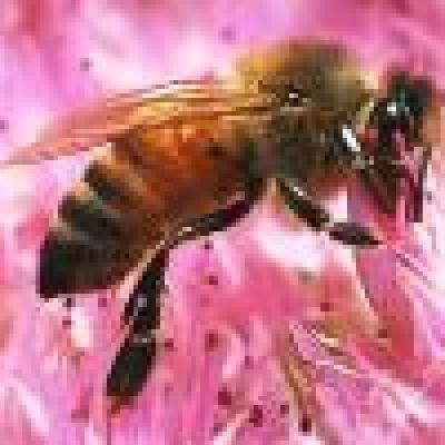 Оси и пчели налитат на силни миризми