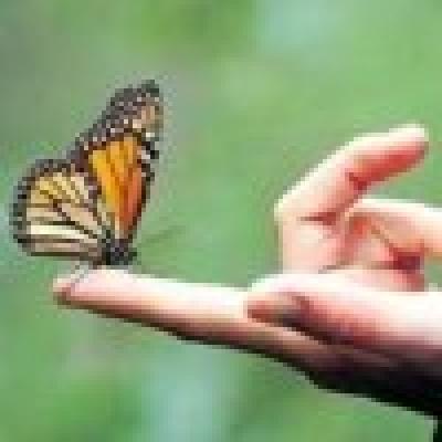Избрани НОВИНИ от пресата за Вас... - Карнавал на пеперудите - на 24 и 25 юли 2010 г.-