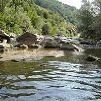 Река Златна Панега - американска пъстърва