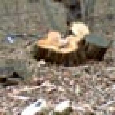 дърва