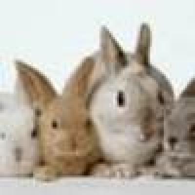 Гушкат зайчета срещу стрес