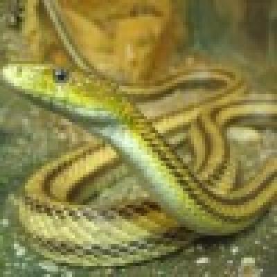 Двама варненци са били ухапани от змии през седмицата