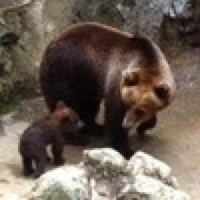 Избрани НОВИНИ от пресата за Вас... - България има най-стабилната популация на мечки в Европа